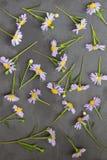 Violett aster på stenbakgrund den blom- ramen inramniner serie Top beskådar Royaltyfria Foton