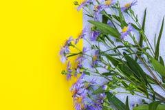 Violett asterblommaram på guling- och grå färgbakgrund överkant VI Royaltyfria Foton
