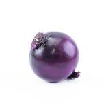 Violett - blå lök på en vit bakgrund - främre sikt Royaltyfria Bilder