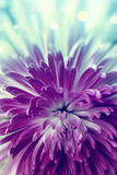 Violett blomma fotografering för bildbyråer
