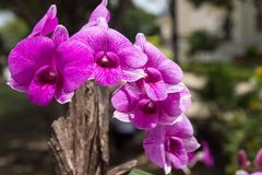 Violett blomma Royaltyfri Bild