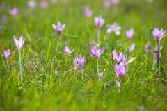 Violett blomma Arkivfoton