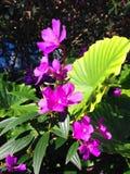 Violett bukett Arkivfoto