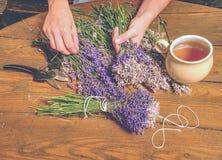 Violett lös lavendelbukett för härlig lukt i handen, sax royaltyfria foton