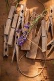 Violett lavendel som är klar att torka i bygd i sommar arkivbild