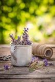 Violett lavendelförberedelse för att torka i grön trädgård arkivfoton