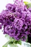 violett lila frunch Royaltyfri Fotografi