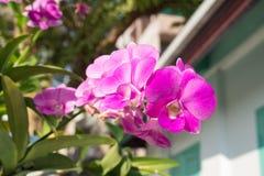 Violett lotusblomma Arkivfoto