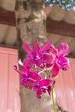 Violett lotusblomma under solljuset Royaltyfri Foto