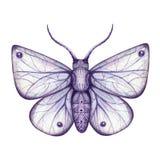 Violett mal för vattenfärg royaltyfri bild