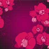 Violett orkidé Fotografering för Bildbyråer