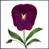 Violett pansy vektor illustrationer