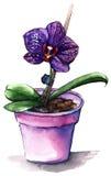 Violett phalaenopsisorkidéblomma i den violetta krukan Royaltyfri Fotografi