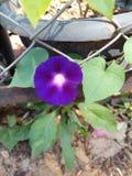 Violett sol Royaltyfri Foto
