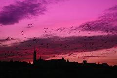 Violett solnedgång arkivbild