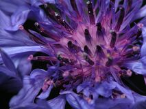 violett vildblomma Arkivfoto