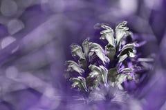 Violett-weißer mit Blumenhintergrund Wildflowers weiß auf einem blured bokeh Hintergrund Nahaufnahme Weicher Fokus Stockbild