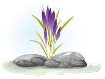 Violetta krokusar för vår på vit Blom- naturvårbakgrund illustrationkrokusblomma Växa för blommor på stenar stock illustrationer