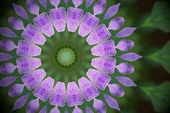 Violetta kronblad för lös blomma och gräsplansidor med kalejdoskopeff Royaltyfria Foton