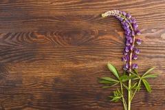 Violetta lupines på träbrädet Royaltyfri Fotografi