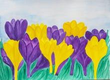 Violetta och gula krokusar Royaltyfri Fotografi