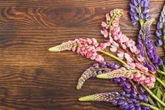 Violetta och rosa lupines på träbrädet Arkivbilder