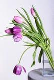 Violetta tulpan i en vas Arkivfoto