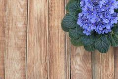 Violette africaine pourpre (Saintpaulia) sur le fond en bois, principal Vi Photographie stock