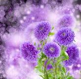 Violette asterbloemen op bokehachtergrond Royalty-vrije Stock Afbeelding