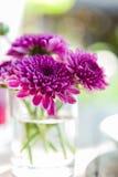 Violette Asterblume im Glas Lizenzfreie Stockbilder