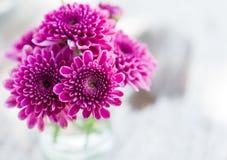 Violette Asterblume im Glas Lizenzfreie Stockfotos