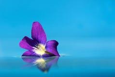 Violette Blüte, die auf Wasser mit Exemplarplatz schwimmt. Stockbilder
