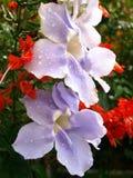 Violette Blüte im tropischen Regenwald Lizenzfreies Stockfoto