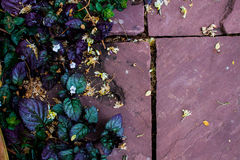 Violette bladachtergrond Royalty-vrije Stock Afbeelding