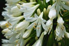 Violette blaue Blumen Stockfoto