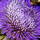Violette bloem Stock Fotografie