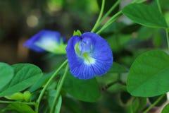 Violette bloem in de tuin stock afbeelding