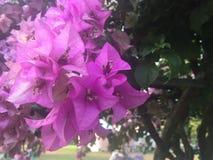 Violette bloem met groen blad Stock Foto