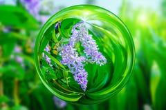 Violette bloem van Petrea Flowers in het effect van de glasbal met vage groene achtergrond Royalty-vrije Stock Afbeelding