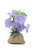 Violette bloemen Royalty-vrije Stock Afbeeldingen