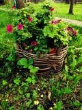 Violette bloemen Royalty-vrije Stock Afbeelding