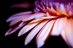 Violette Blume Lizenzfreie Stockbilder