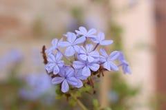 Violette Blume auf de-fokussiertem Hintergrund stockbilder
