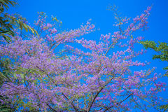 Violette Blume auf Hintergrund des blauen Himmels Lizenzfreie Stockfotos