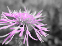 Violette Blume auf Wiese Lizenzfreie Stockbilder