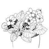 Violette Blume im Topf Lizenzfreies Stockbild