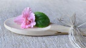 Violette Blume mit einem Blatt Lizenzfreie Stockfotos