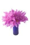 Violette Blume mit waterdrops Stockfotografie