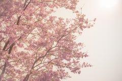 Violette Blume verzweigt sich Weichzeichnung Lizenzfreie Stockfotografie