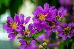 Violette Blumen Lizenzfreie Stockfotografie